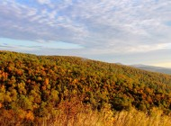 Fall in Love with Virginia